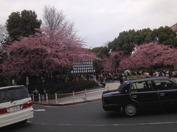 五條天神社桜